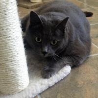THOMAS-CAT